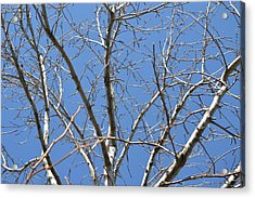 Smallest Branches Acrylic Print by Kiros Berhane