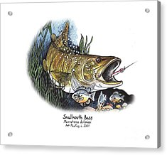 Smallmouth Bass Acrylic Print