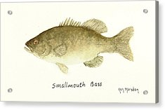 Smallmouth Bass Acrylic Print