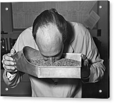 Smelling Grain Inspector Acrylic Print by Underwood Archives