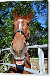 Acrylic Print featuring the photograph Smile by Ed Weidman