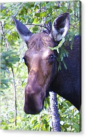 Smile For The Camera Acrylic Print by Ron Haist