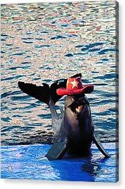 Smiley Dolphin Acrylic Print by Sarode Nimmanwattana
