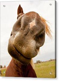 Smiley Horse Acrylic Print by Paulina Szajek