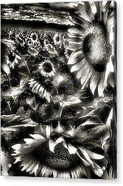 Smilin Atchya Acrylic Print