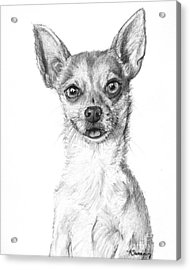 Smiling Chihuahua In Charcoal Acrylic Print by Kate Sumners