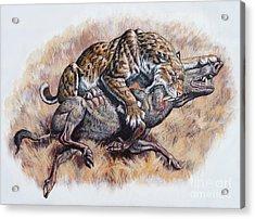 Smilodon Dirk Sabertooth Killing Acrylic Print by Mark Hallett