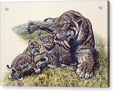 Smilodon Sabertooth Mother And Her Cubs Acrylic Print by Mark Hallett