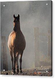 Smoke Acrylic Print by Rod Giffels
