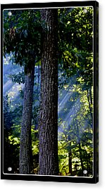 Smoke Through The Trees Acrylic Print