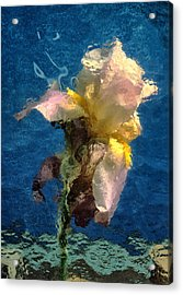 Acrylic Print featuring the photograph Smoking Iris by Gary Slawsky