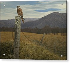 Smoky Mountain Hunter-american Kestrel Acrylic Print by James Willoughby III