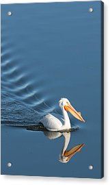 Lake Cruiser Acrylic Print by Jan Davies