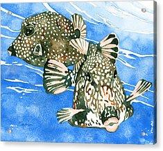 Smooth Trunkfish Pair Acrylic Print