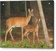 Smudgie And Fawn Pastel Acrylic Print