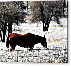 Snack Recess Acrylic Print by Naomi Richmond