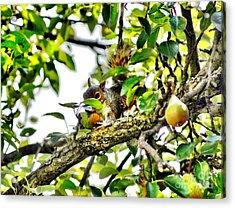 Snack Time Acrylic Print by Judy Palkimas