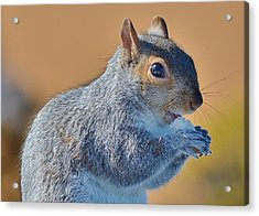 Snack Time Acrylic Print by Thomas  MacPherson Jr