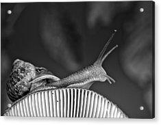 Snail And Mushroom Acrylic Print by Nailia Schwarz