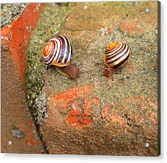 Acrylic Print featuring the photograph Snail Snail The Gangs All Here by Mary Bedy