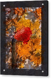 Snail Sory - S20-01bb Acrylic Print by Variance Collections