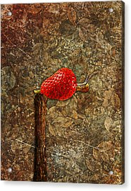 Snail Story - S01-03a Acrylic Print by Variance Collections