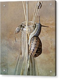 Snails Acrylic Print by Nailia Schwarz