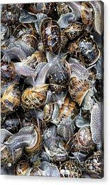 Snails Acrylic Print by Tim Gainey