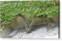 Acrylic Print featuring the photograph Snake Branch by Nora Boghossian