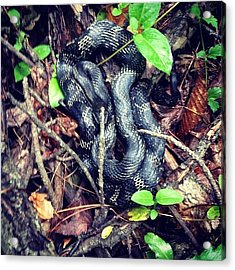 #snake Found In Our Hike At #ferdinand Acrylic Print