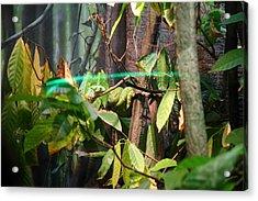 Snake - National Aquarium In Baltimore Md - 12121 Acrylic Print