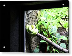 Snake - National Aquarium In Baltimore Md - 12123 Acrylic Print by DC Photographer