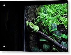 Snake - National Aquarium In Baltimore Md - 12124 Acrylic Print