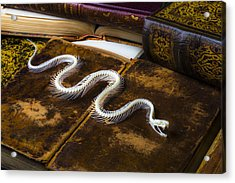 Snake Skeleton And Old Books Acrylic Print by Garry Gay