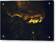 Snake Acrylic Print by Valarie Davis