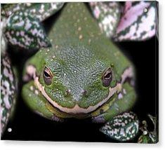Snakefrog Acrylic Print by Joseph Tese