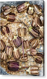Snakes Head Fritillary Flower Seeds Pattern Acrylic Print by Tim Gainey