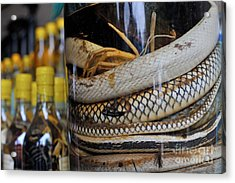 Snakes In Snake-flavoured Alcohol Bottles  Acrylic Print