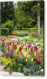 Snapdragon Garden Acrylic Print by Margaret Buchanan