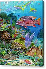 Snapper Reef Re0028 Acrylic Print by Carey Chen