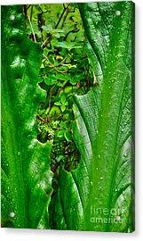 Acrylic Print featuring the photograph Sneak Peek by Cynthia Lagoudakis