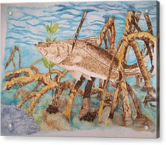 Snook Original Pyrographic Art On Paper By Pigatopia Acrylic Print by Shannon Ivins