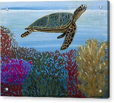 Snorkeling Maui Turtle Acrylic Print