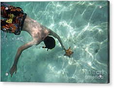 Snorkeller Touching Starfish On Seabed Acrylic Print by Sami Sarkis