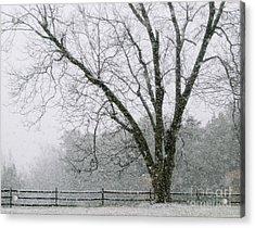 Snow And Pecan Tree Acrylic Print