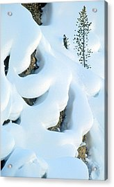 Acrylic Print featuring the photograph Snow And Tree by Judi Baker