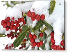 Snow Berries Acrylic Print