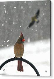 Snow Bird II Acrylic Print