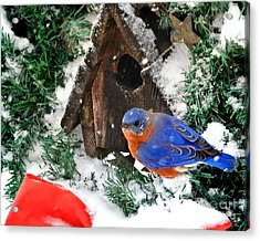 Snow Bluebird Christmas Card Acrylic Print