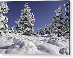 Snow Bomb Acrylic Print by Tom Wilbert